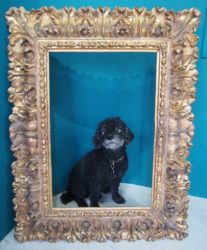 william campbell  fine frames and framing